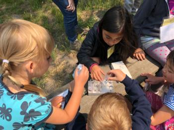 Kids exam their insect collections